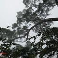 我的數位相機拍起來沒有層次感。去踏青用眼睛感受真實的變化吧。那山景,那雲海。