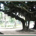 於1903年開園台中公園,位於台中市區是休憩散心沉澱的好地方.