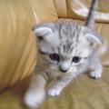 貓小弟來囉 我承認咪寶的照片真的很少  因為......太難拍了 活潑愛動的咪寶  是攝影師的剋星