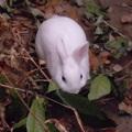 「007.2 叢林野兔特輯」 誰說只有人類可以當探警,兔寶將背負重責大任,前往曾家庭院。尋找3892年前的秘密寶藏。      邀妳一起跟著兔寶的行動,飛向宇宙,浩瀚無垠!