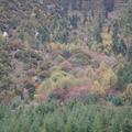 2010秋天 在川西甘孜藏族自治區旅遊了15天 沿途看到好多色彩 大地潑灑萬紫千紅 美不勝收