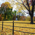 New York, New York. Nov. 2008