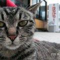 我在東瀛遇見貓