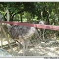 波德申鴕鳥園 - 馬來西亞