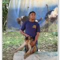 猴子表演 - 波德申鴕鳥園 - 馬來西亞