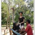 騎鴕鳥 - 波德申鴕鳥園 - 馬來西亞