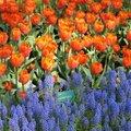所有的花ㄦ,都不是盆栽,顏色能在當初栽種時,就能配的這麼好,應該花費不少心血工夫.