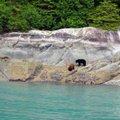 坐渡輪遊崔西手臂冰河灣時,無意中看到一隻棕熊和一隻黑熊,大家都興奮不已.