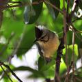 沒有預計的行程,卻在不預期的心情中遇見了鳥兒的驚喜~~~