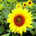一般花卉植物 - 4