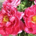 一般花卉植物 - 1