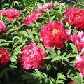 一般花卉植物 - 2