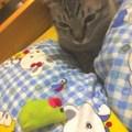 寶貝想玩老鼠