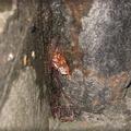 螞蟻與蟑螂
