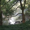 2010/11/17-22 和我妹妹到江南一遊 被綻滿黃葉的銀杏樹迷昏了 杭州之美,從此讚不絕口 照片檔案太大 慢慢再傳上