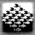 【 魚鴨,圖片來源:hhttp://www.mcescher.com/Biography/lw306.jpg 】