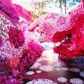 """這是好萊塢花藝大師的花博作品""""園塘幻境 春日悠遊"""" 是一個360度的全空域環境藝術創作, 好萊塢的奢華盡顯,讓人驚喜極了,......."""