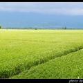 呵呵,跟大家介紹a-yon出生之地,台東縣池上鄉(臺灣地區知名的米鄉)。池上以及附近地區所生產的米,享譽國際;池上便當在臺灣更是家喻戶曉。