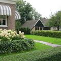 荷蘭羊角2