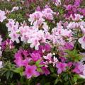 春暖花開, 奇花異草, 萬紫千紅, 綠意盎然, 隨處可見. 隨著四季變換多姿, 或清明、或迷濛.