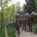 天平山紫藤