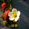 隨手拍的蔬菜水果的花兒,有些花兒還挺美挺特別勒~~