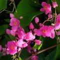 主要介紹澎湖島上的花朵