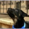 這裡記錄著每個狗狗的遭遇與故事