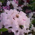 恬謐雋美╱翩舞 朵朵,燦開花語 葉葉乘願,寤了清風╱田園臻芬綠 文淵陶然╱鏡頭與心靈,思箋馥郁。