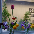 最美的春日時光 - 春光滿庭園 - 3
