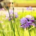 嫣紅奼紫得生機盎然....