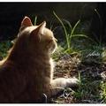 偌大的園子任來去,這隻貓,算幸福吧!