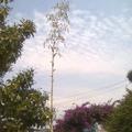 梅子懷舊公園入口旁的不知名植物足足有7-8公尺高。