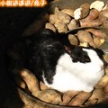 兔子(184)