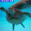 沖繩-海洋博公園海龜館之海龜(204)