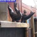 遠雄悅來渡假飯店-海洋公園之晃晃海獅秀(205)