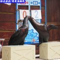 遠雄悅來渡假飯店-海洋公園之晃晃海獅秀(206)