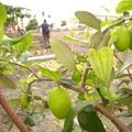 UDN格友創意農場, 供給格友們認養