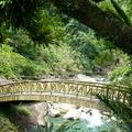 台灣的山林無限美好,無論春夏秋冬,都想往森林奔去!