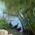 蘭陽平原的湖