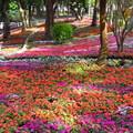 台南公園賞花 - 3