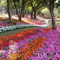 台南公園賞花 - 4