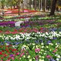 台南公園賞花 - 1