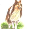 文章裡的動物圖