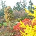 2007年10月下旬攝於溫哥華市伊麗莎白皇后公園內的秋色.  有黃色的銀杏、紅色的楓葉、橙色的櫻樹、棕色的水杉等等.