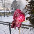 2008年耶誕前,溫哥華迎來一場連續數日的雪暴,積雪達50公分,給人帶來歡樂的銀白聖誕,也帶來不少的磨難.