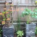 住在公園綠地佔三分之一的温哥華市十餘年,總堅持既然到處得見花叢錦簇,何必自己種花的我,因緣開始了臨老入花叢的日子,也興起用相機留下汗滴鏟下土的過程.