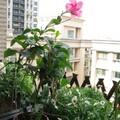 我的台北藝術家十樓空中花園