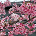 圖片引用自