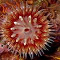 海中的視覺生物   超美的~